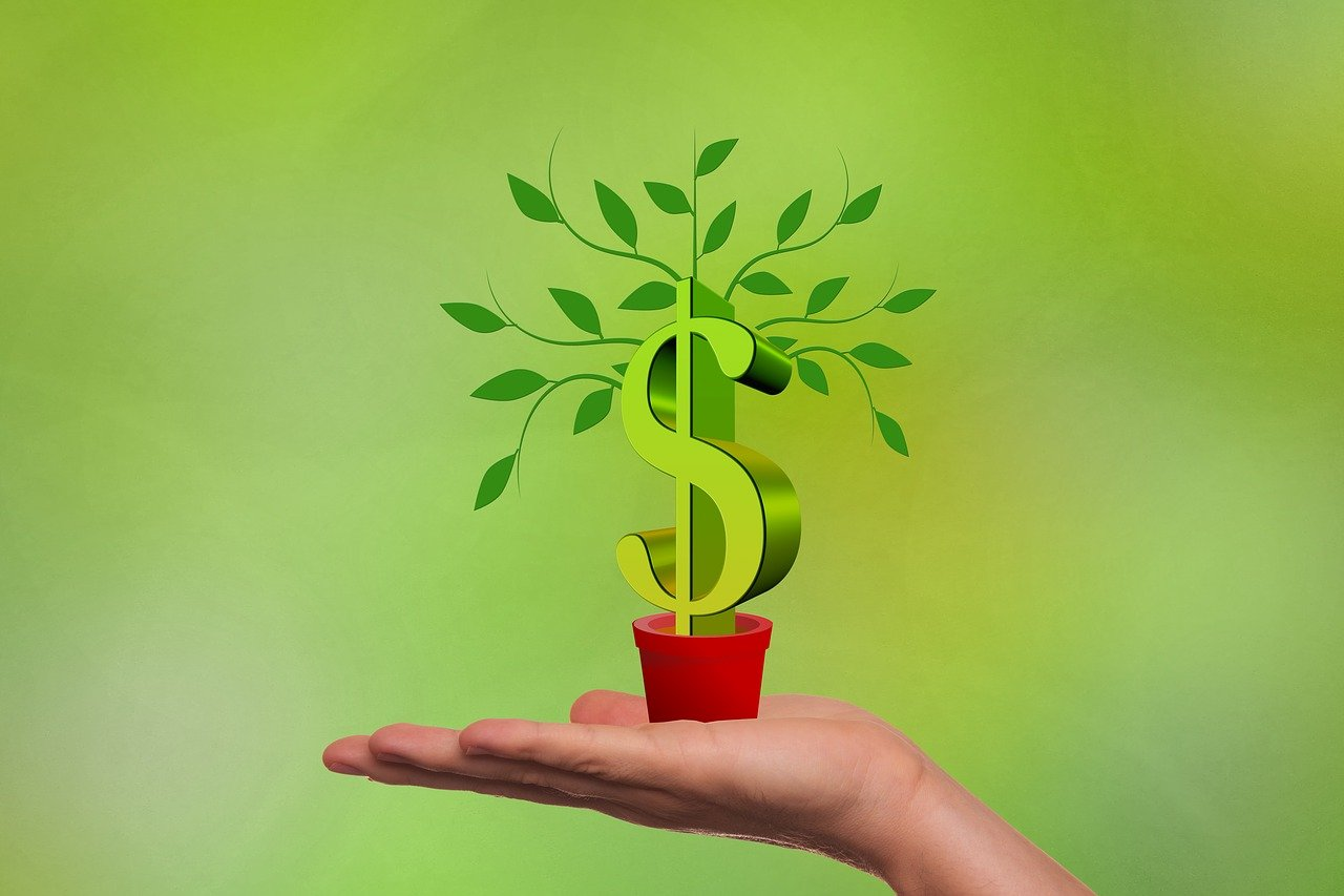 Small money tree plant representing financing a business